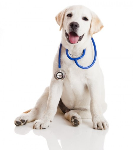 Hund beim Tierarzt